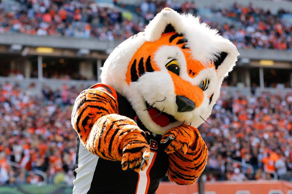 Who Dey mascote do Cincinnati Bengals